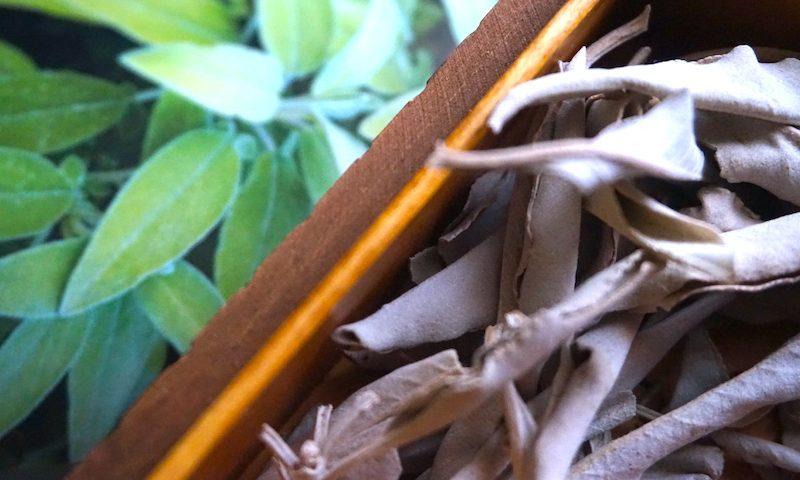 Getrocknet und frisch - Salbeiblätter ergeben einen hervorragenden Tee. Dry or fresh sage leaves make a wonderful tea. Foto: Rheuma Optimist